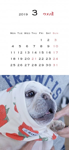スマホこうめさんカレンダー2019.3
