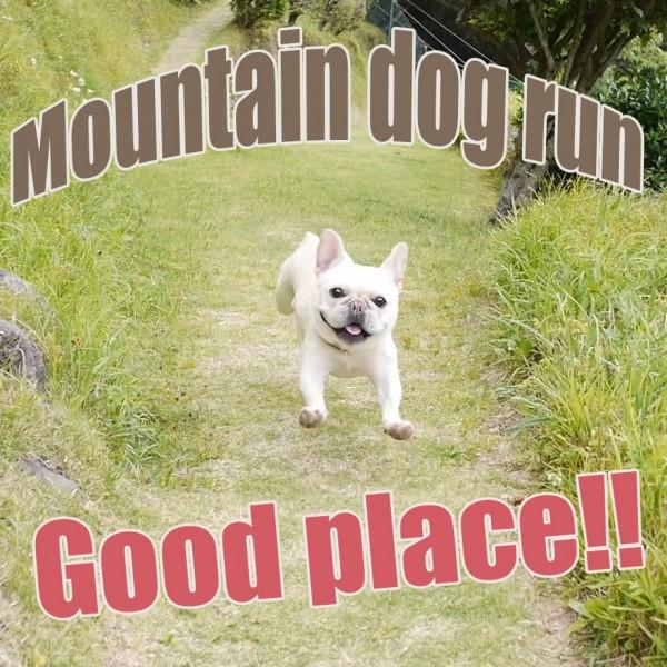 マウンテンドッグラン犬