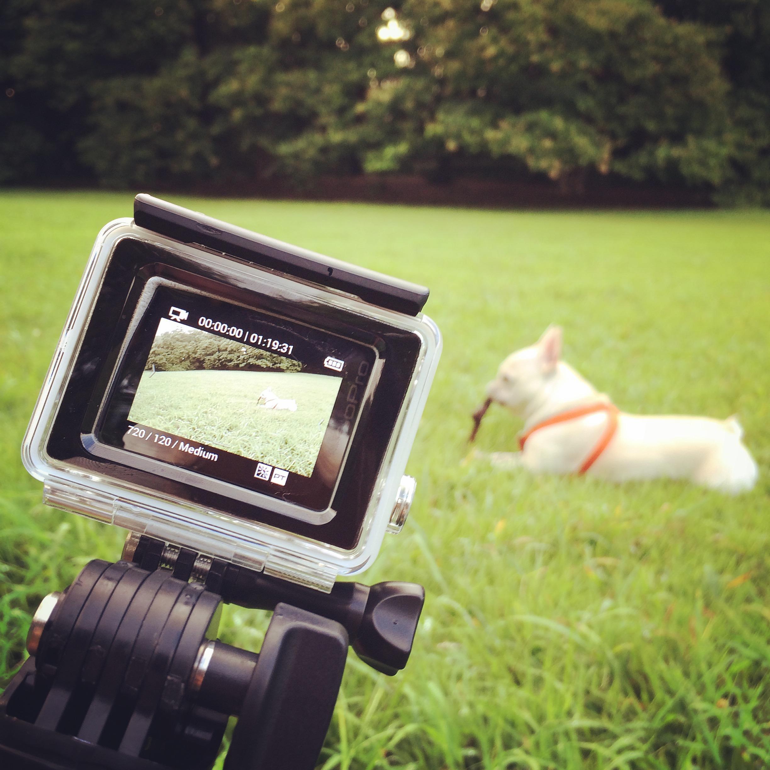 GoPro dog 犬