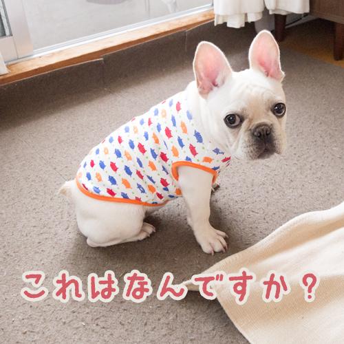 フレンチブルドッグ 服