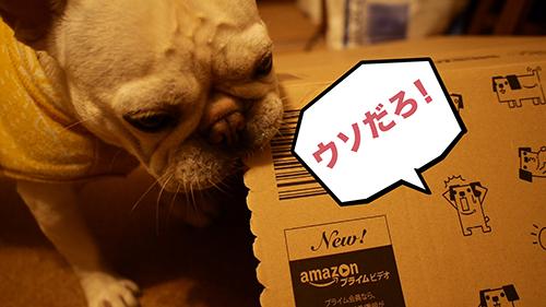 amazonレア箱犬のポチ