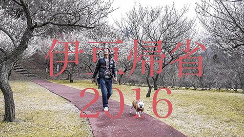 伊豆で愛犬旅