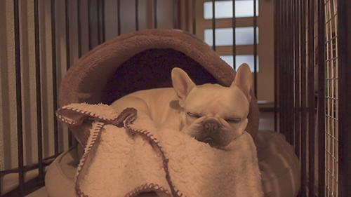 犬のかまくらドーム型ベッド