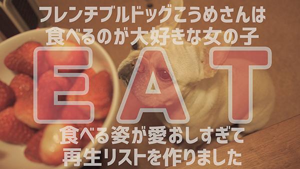 フレンチブルドッグ食べる