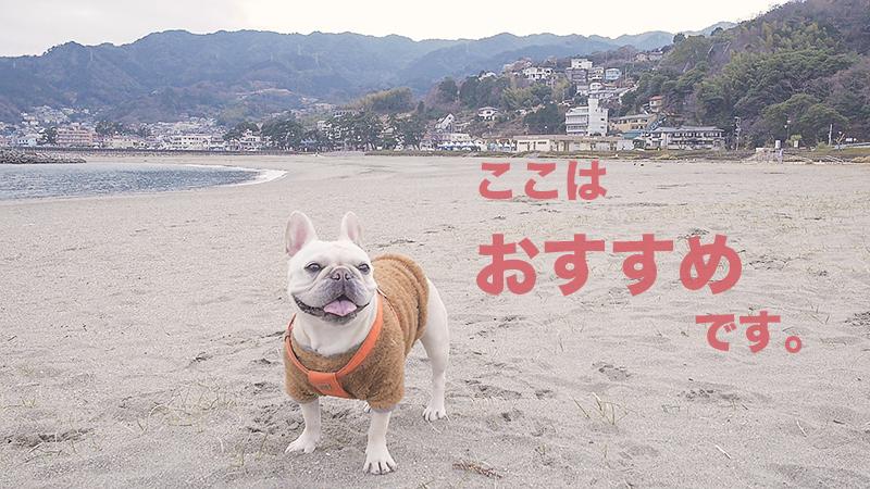 長浜海浜公園と犬
