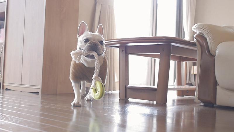 犬のあたらしいオモチャ