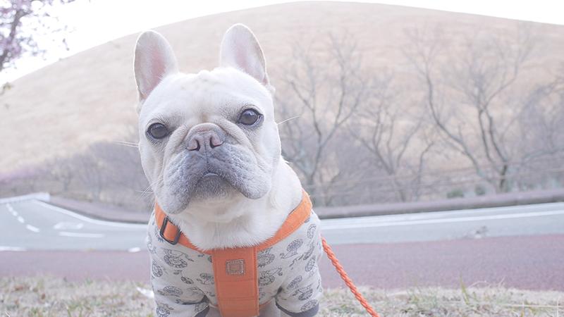 大室山 犬