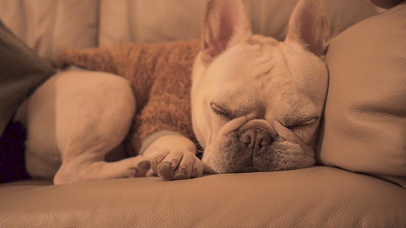 マーフィ お宿で愛犬就寝