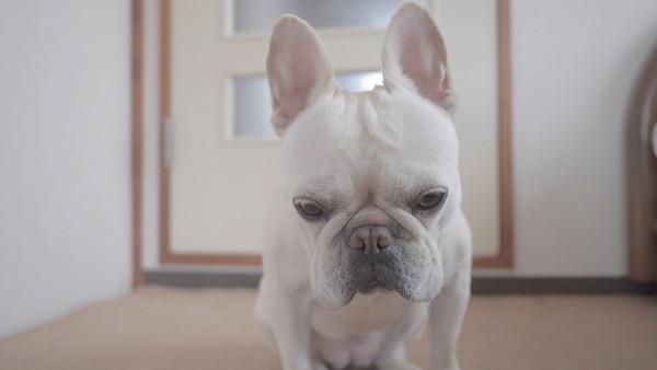 犬 避妊手術3