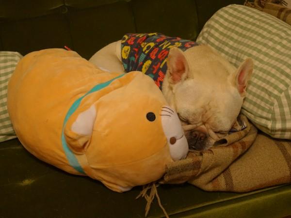 フレンチブルドッグこうめさんと猫2