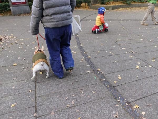 フレンチブルドッグこうめさんVAMOSのお洋服で公園散歩7