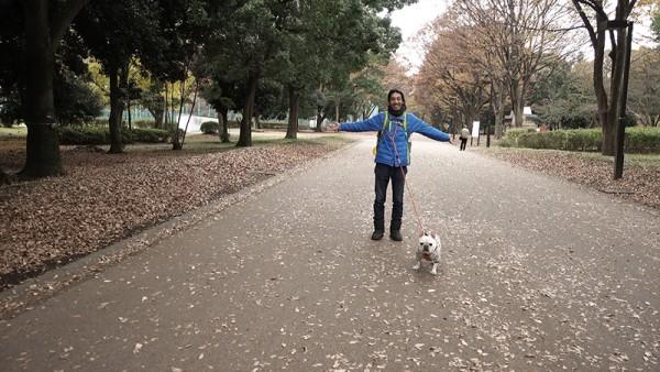 フレンチブルドッグこうめさんと砧公園の紅葉