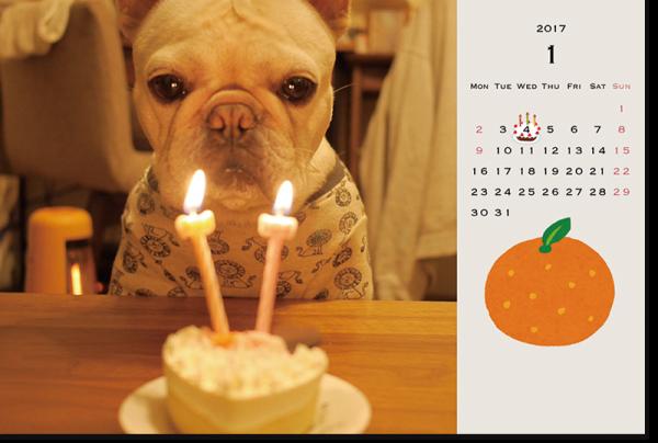 フレンチブルドッグこうめさんカレンダー2017卓上サイズ3.5