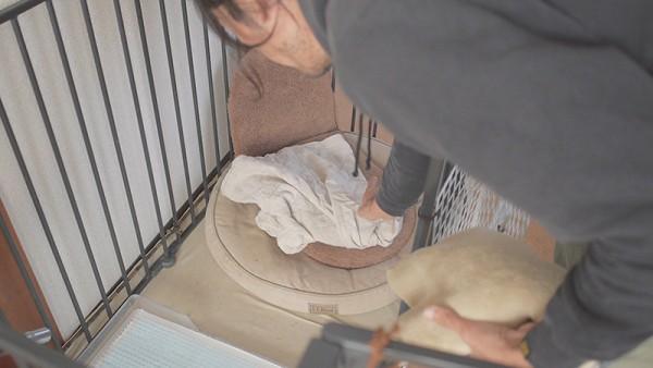 犬のかまくらドーム型ベッドゆたぽん2