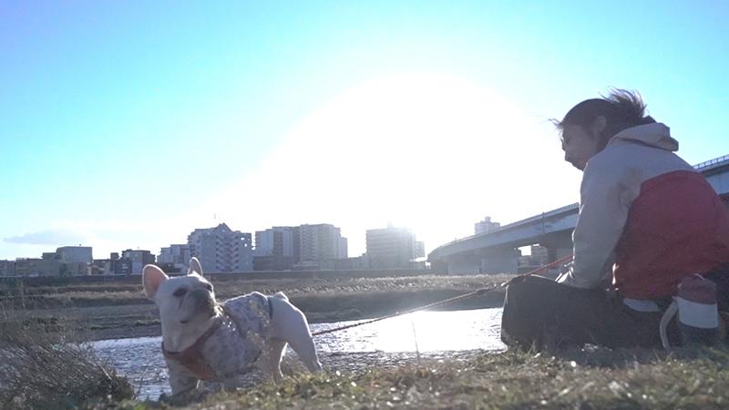 フレンチブルドッグこうめさんと多摩川でまったり