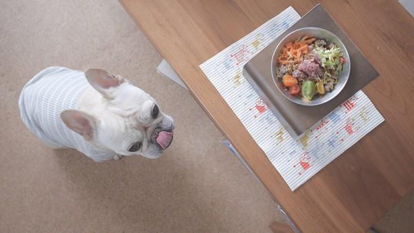 フレンチブルドッグこうめさんと生野菜のごはん