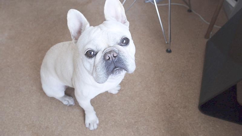 かわいい愛犬にイタズラするメリット