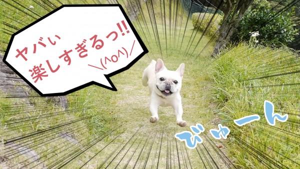 伊豆犬マウンテンドッグラン
