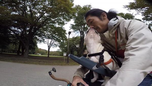 Buddyriderバディライダー犬用ペット乗せ自転車4