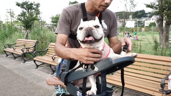 Buddyriderバディライダー犬用ペット乗せ自転車6