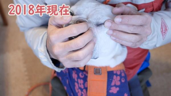 犬の手作りご飯涙やけレシピ3