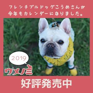 フレンチブルドッグこうめさんカレンダー告知2019