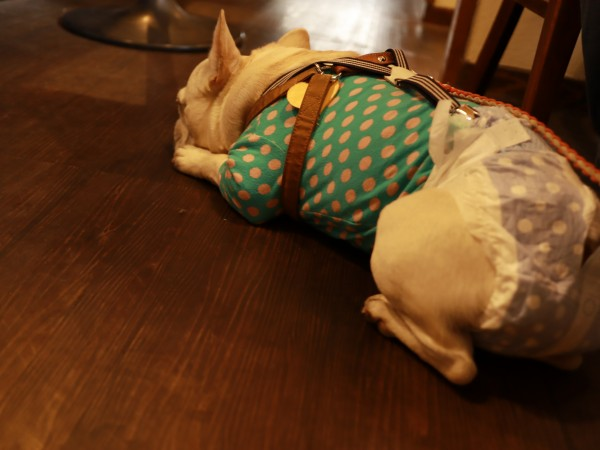 用賀Cafe and Dining Paco犬OKペット可