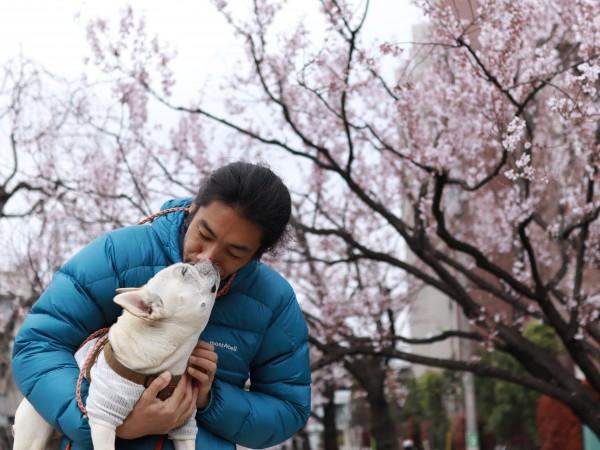 梅本寛こうめ桜