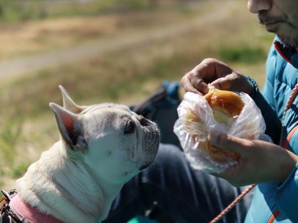 多摩川河川敷ピクニック犬