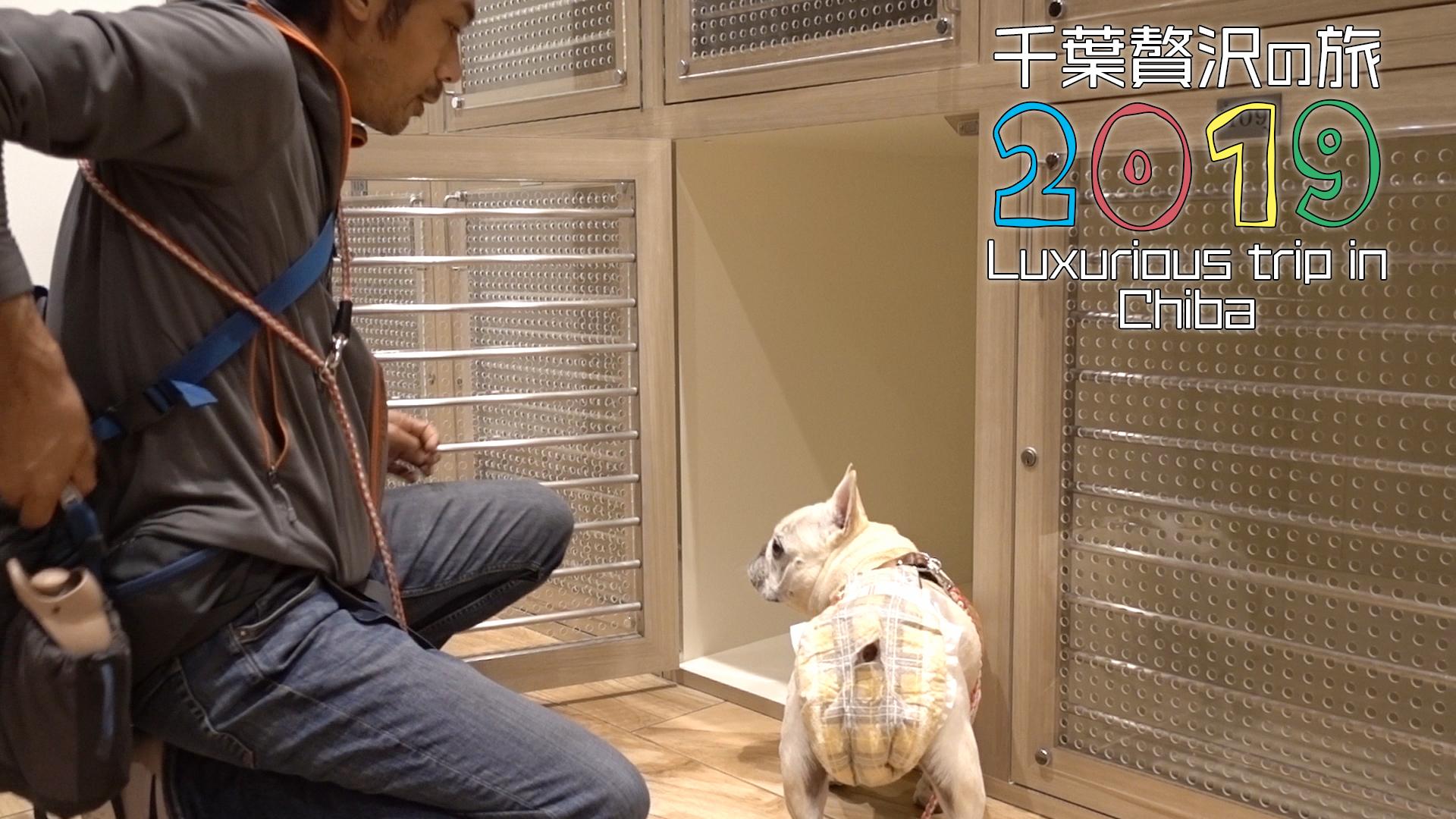 シェラトングランデ東京ベイのドッグキャビン初体験4