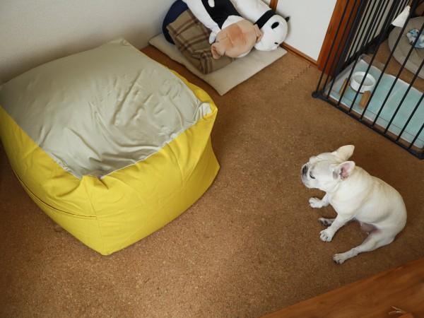 Relaリラビーズクッションと犬