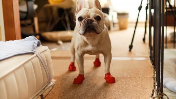 パウズ犬靴赤着色落ち
