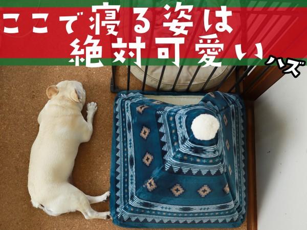 犬テントベッド可愛い