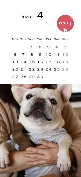 スマホこうめさんカレンダー2020.4