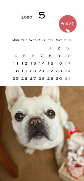 スマホこうめさんカレンダー2020.5.