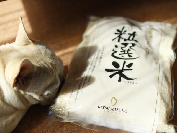 新潟産コシヒカリみずほの粒選米