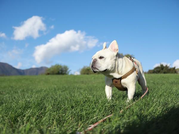小海公園と犬