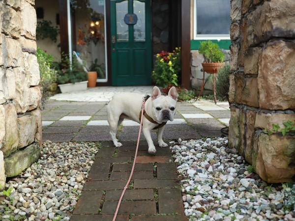 河口湖プライベートホテル麗ペット宿犬