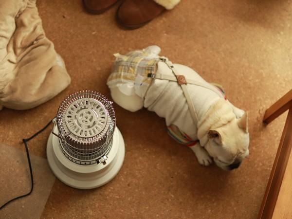 電気ストーブ犬レトロかわいい