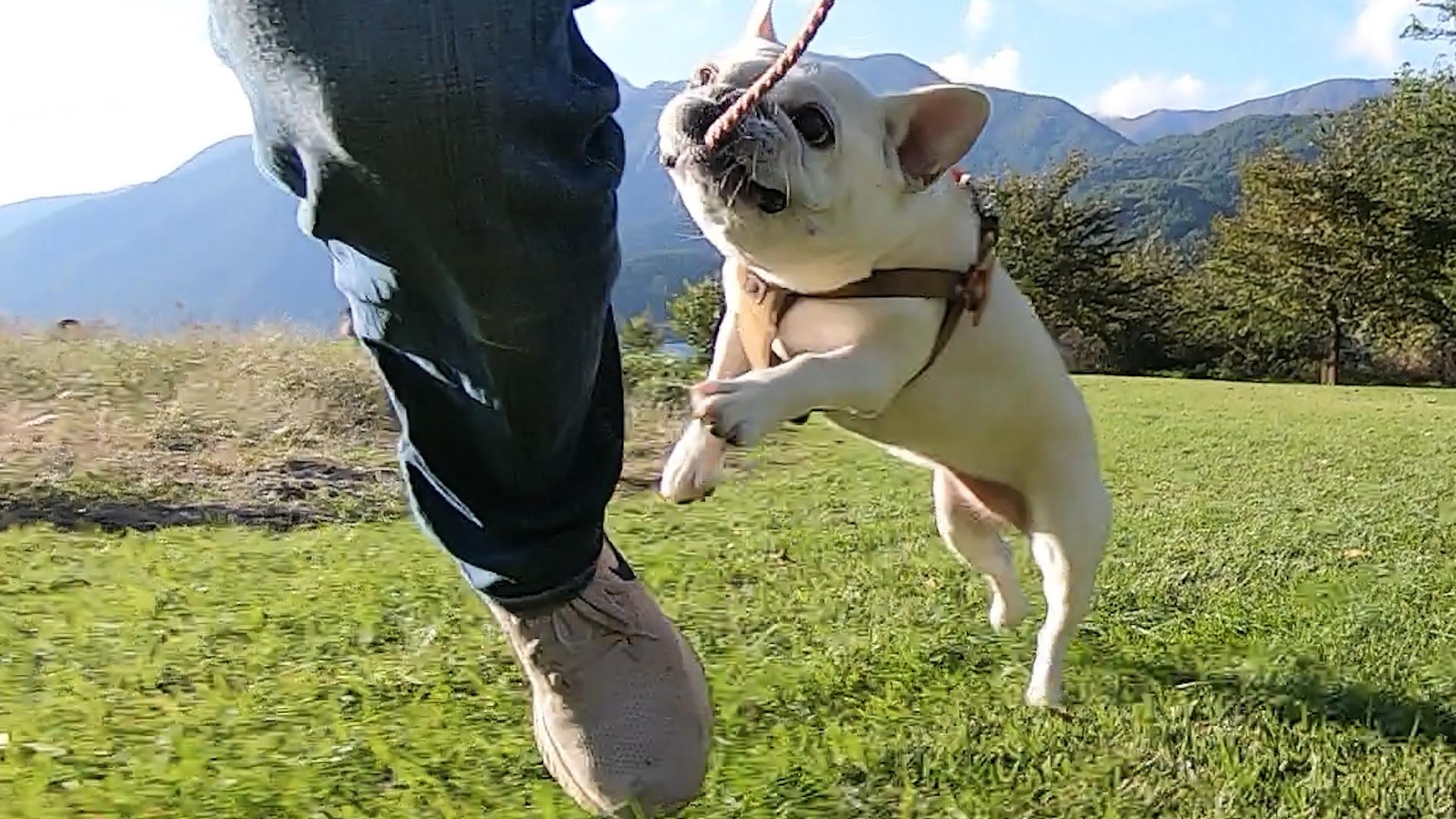 河口湖小海公園犬
