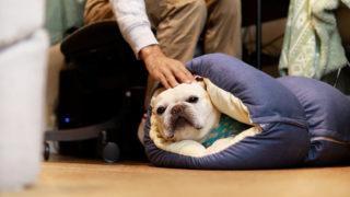 しまホイの上を行く、犬専用もっちもちロールクッション見つけた【PR】