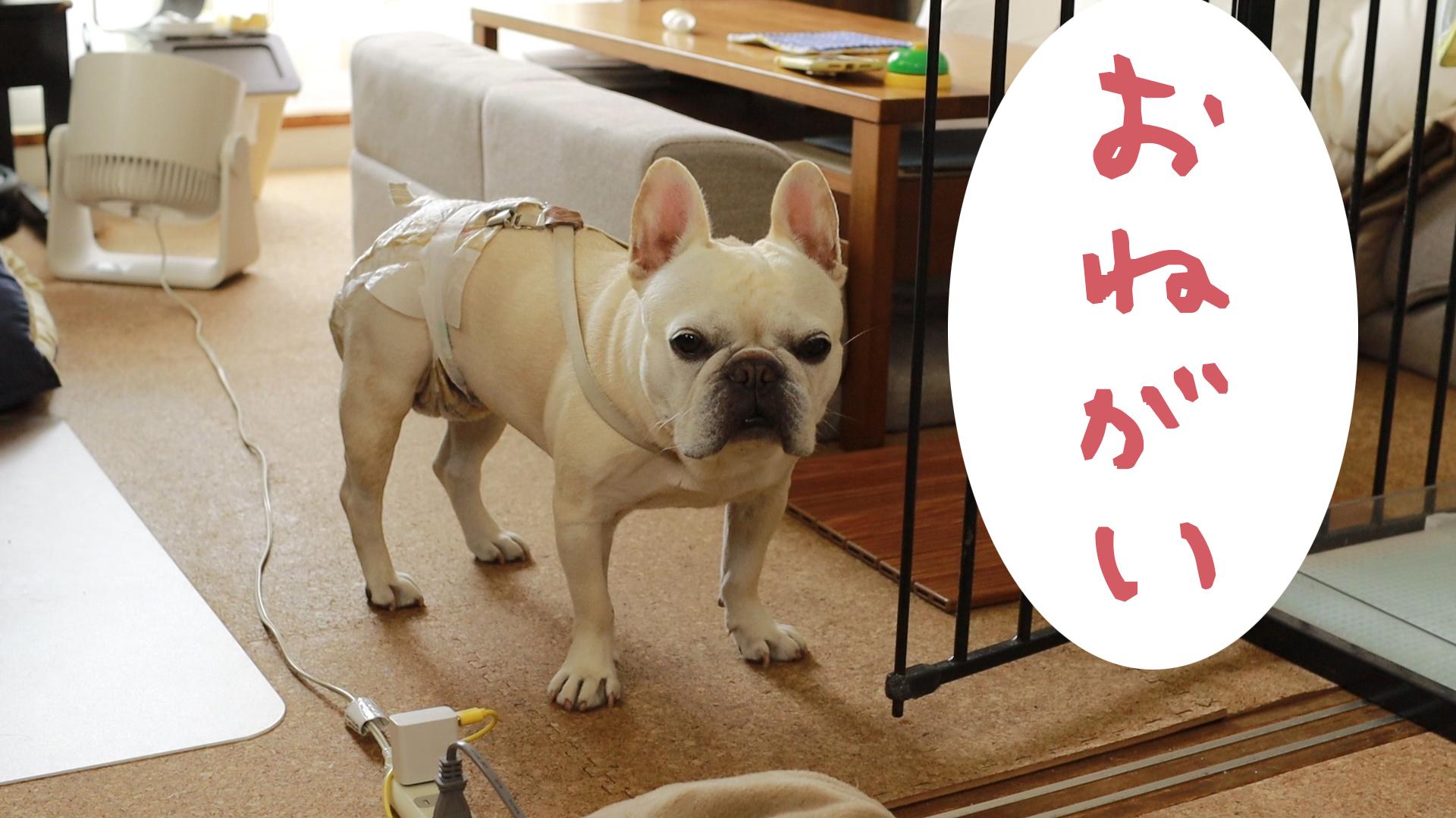 犬猫ペット数値規制