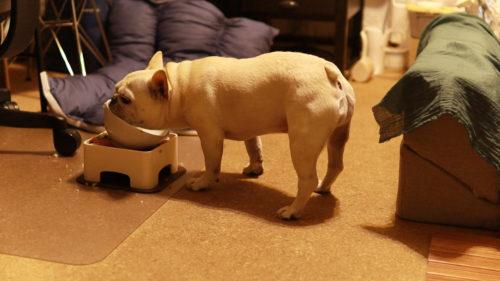 犬の血液検査食事